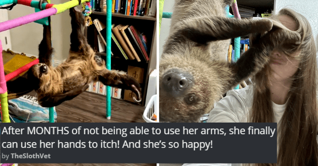 viral imgur threads about a recovering sloth thumbnail includes two pictures including a sloth playing with a girl's hair and a sloth hanging from a toy castle 'After MONTHS of not being able to use her arms, she finally can use her hands to itch! And she's so happy! TheSlothVet'