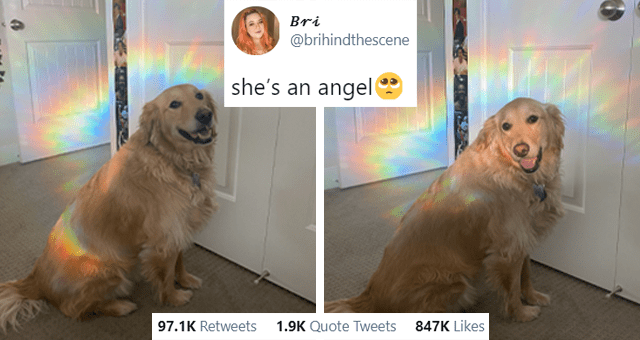 this week's collection of animal tweets thumbnail includes two pictures of a dog surrounded by a rainbow 'Dog - Bri ... @brihindthescene she's an angel 1:07 AM - Jan 31, 2021 Twitter for iPhone 96.1K Retweets 1.9K Quote Tweets 840.5K Likes'