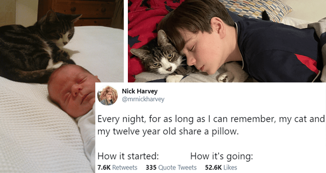 tweets of kids and people sleeping curled up with their cats thumbnail includes two pictures including an infant sleeping next to a cat and a slightly older child sleeping next to a cat 'Head - Nick Harvey @mrnickharvey ... Every night, for as long as I can remember, my cat and my twelve year old share a pillow. How it started: How it's going: 10:49 AM - Jan 28, 2021 · Twitter for iPhone 7.6K Retweets 335 Quote Tweets 52.6K Likes'