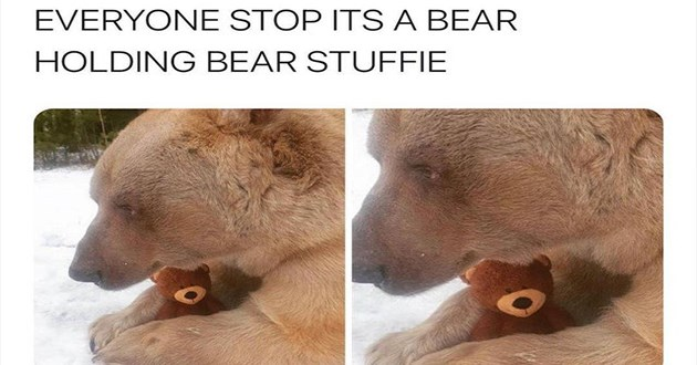 "weeks best and cutest wholesome animal memes - thumbnail of bear hugging stuffed teddy bear ""EVERYONE STOP ITS BEAR HOLDING BEAR STUFFIE"""