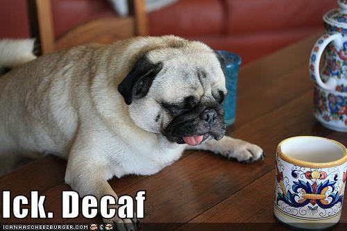 breakfast coffee nom nom nom pug - 1351245056