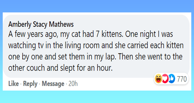 stories of cats trusting their owners with their kittens thumbnail includes one Facebook comment 'Rectangle - Amberly Stacy Mathews A few years ago, my cat had 7 kittens. One night I was watching tv in the living room and she carried each kitten one by one and set them in my lap. Then she went to the other couch and slept for an hour. 770 Like · Reply Message 20h'