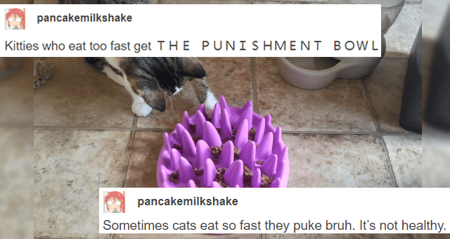 funny and informative tumblr thread about helping cats eat slowly thumbnail includes a picture of a cat trying to eat from a challenging bowl 'Cat - Kitties who eat too fast get THE PUNI SHMENT B OWL Sometimes cats eat so fast they puke bruh. It's not healthy. pancakemilkshake'