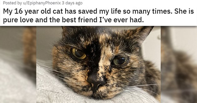 "cat medley filled with cuteness, laughs, rescues - thumbnail of cat ""My 16 year old cat has saved my life so many times. She is pure love and the best friend I've ever had."""