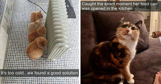 """fresh cat snaps - thumbnail includes two cat snaps - one of multiple cats in front of radiator """"it was cold... we found a good solution"""" and cat with big eyes """"Caught the exact moment her food can was opened in the kitchen"""""""
