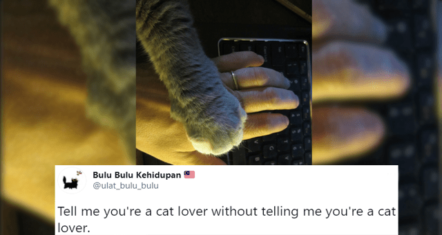 this week's collection of cat tweets thumbnail includes a picture of a cat placing its paw on a human's hand 'Product - Bulu Bulu Kehidupan @ulat_bulu_bulu Tell me you're a cat lover without telling me you're a cat lover. 4:31 AM Jan 30, 2021 · Twitter for Android 3K Retweets 977 Quote Tweets 12.3K Likes IN'