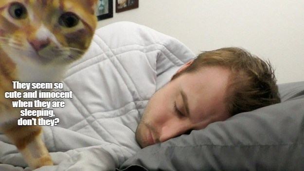 """ichc original cat memes lolcats - thumbnail of cat next to sleeping man """"They seem so cute and innocent they are sleeping, don't they?"""""""
