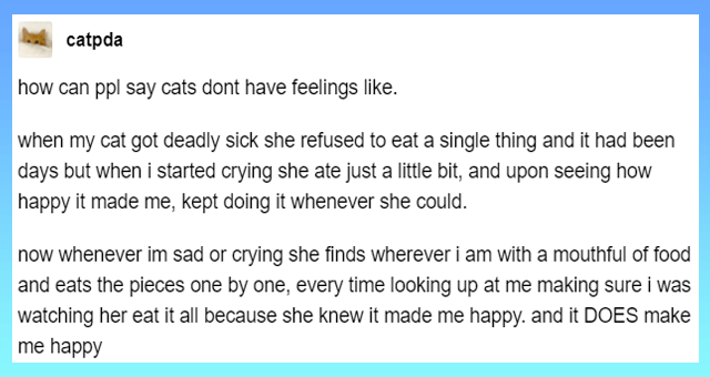 tumblr posts proving that cats are not cold thumbnail includes one tumblr post 'Font - catpda Follow how can ppl say cats dont have feelings like. when my cat got deadly sick she refused to eat a single thing and it had been days but when i started crying she ate just a little bit, and upon seeing how happy it made me, kept doing it whenever she could. now whenever im sad or crying she finds wherever i am with a mouthful of food and eats the pieces one by one, every time looking up at me making'