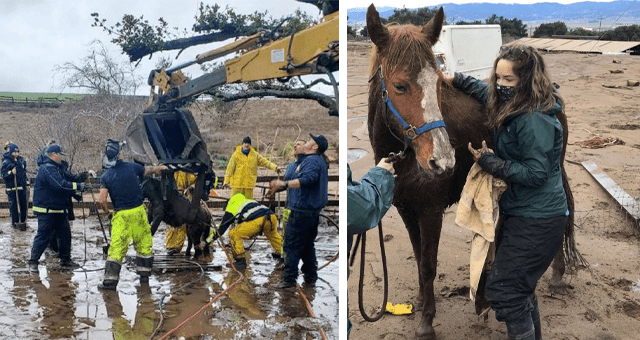 story about a horse and a pony who were stuck in mud for18 hours getting rescued thumbnail includes two pictures including firefighters rescuing a pony from a hole in the ground and another of a woman next to a rescued horse