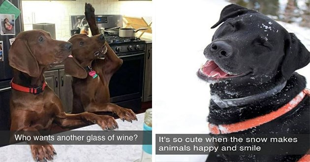 """fresh dog snaps - thumbnail of two dogs with one arm raised """"who wants another glass of wine"""" and one of a smiling dog in the snow """" It's so cute when the snow makes animals happy and smile"""""""