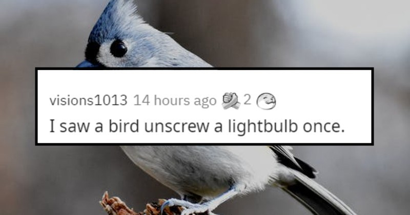 unlikely and weird stories | visions1013 14 hours ago saw bird unscrew lightbulb once.