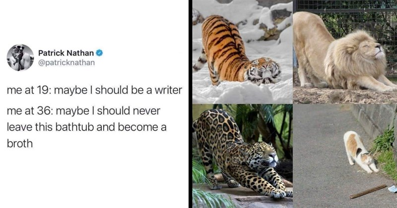 funny memes, random memes, wholesome memes, dank memes, relatable memes, memes, lol, funny, stupid memes, funny tweets, twitter memes | Patrick Nathan @patricknathan at 19: maybe should be writer at 36: maybe should never leave this bathtub and become broth | cat lion tiger and jaguar stretching in the same position