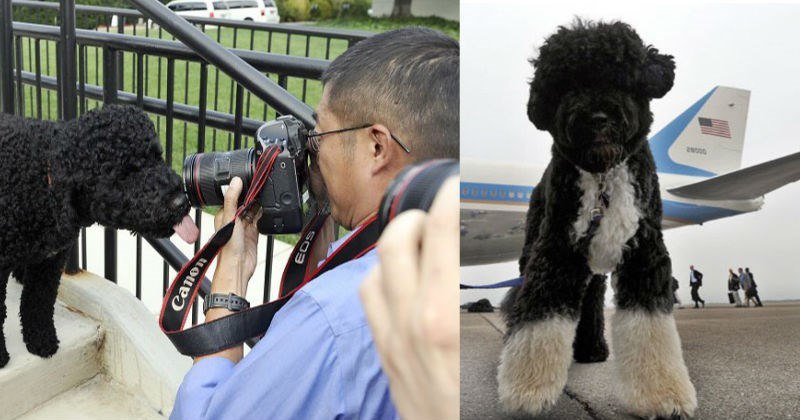 dogs,White house,first dogs,president