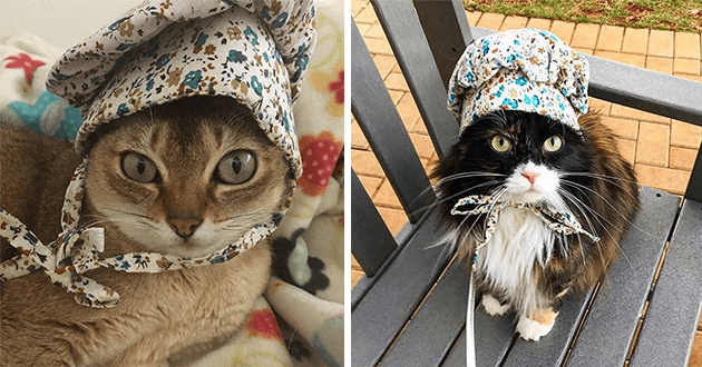 cats wearing bonnets - thumbnail of two cats in similar bonnets