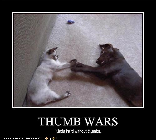 dogs lolcats loldogs thumbs wars - 1354230016
