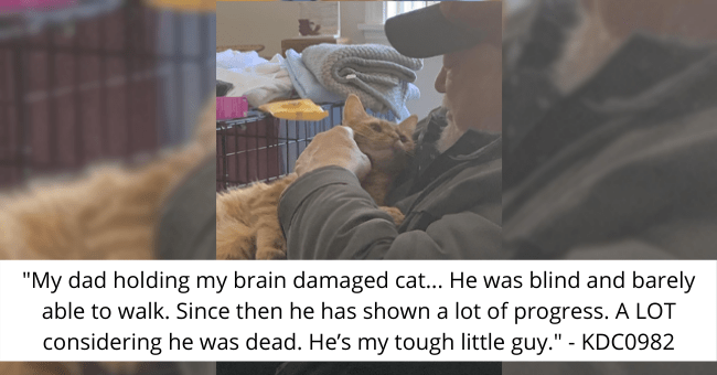 "story of a cat with brain damage thumbnail includes a picture of a cat lying on a human '""My dad holding my brain damaged cat... He was blind and barely able to walk. Since then he has shown a lot of progress. A LOT considering he was dead. He's my tough little guy."" - KDC0982'"