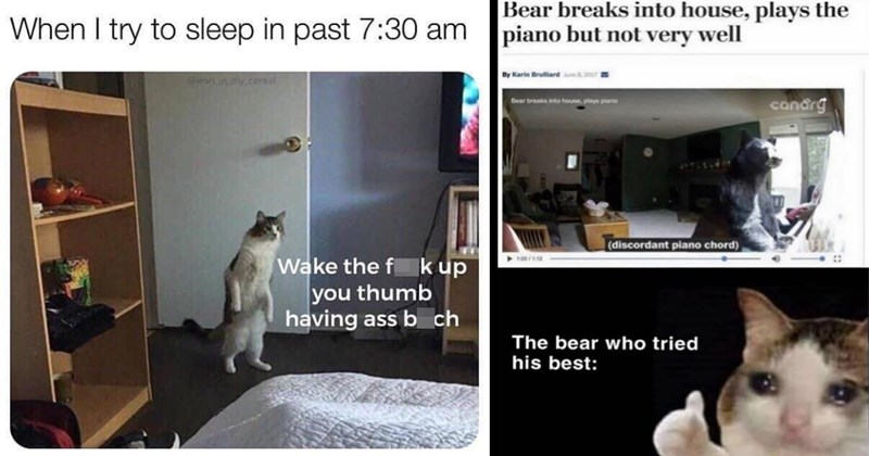 random memes, funny memes, stupid memes, dank memes, shitposts, relatable memes, meme dump, funny, lol, memes, funny pics, twitter memes | try sleep past 7:30 am Wake fuck up thumb having ass bitch cat walking upright entering a room | bear breaks into house, plays piano but not very well By Karin Brulliard un 2017 candrg Bear breaks into houne, plays piano (discordant piano chord) 100/1:12 bear who tried his best:
