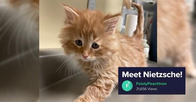 "adorable little orange kitten just being adorable - thumbnail of little orange kitten ""Meet Nietzsche!"""