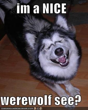 husky nice smile werewolf - 1356209920