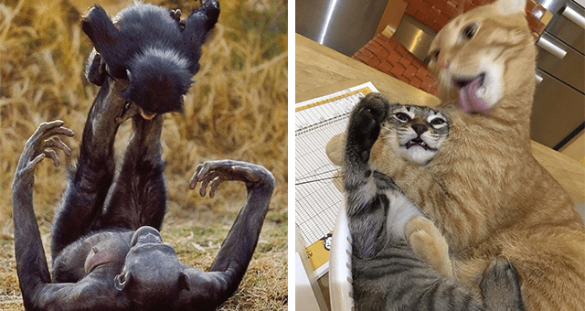 collection of pictures worth more than 1000 words thumbnail includes two pictures including a chimpanzee mom holding her baby with her legs and another of two cats mid movement one licking itself and the other fighting it