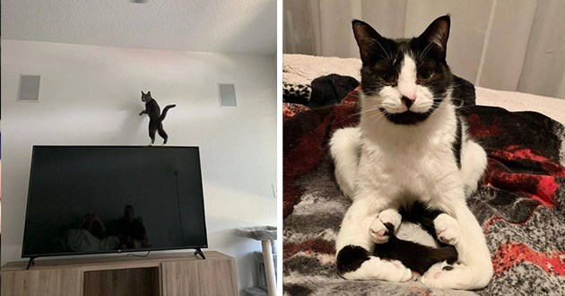pictures of cats defying the laws of physics - thumbnail includes two images one of a cat on a tv and one of a cat sitting really strange