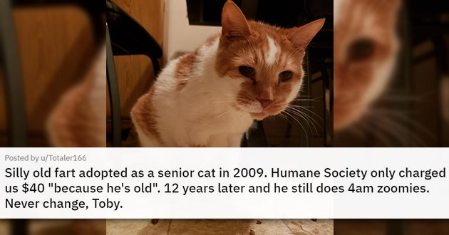 "cat medley filled with cuteness, laughs, rescues - thumbnail of senior cat ""Silly old fart adopted as a senior cat in 2009. Humane Society only charged us $40 ""because he's old"". 12 years later and he still does 4am zoomies. Never change, Toby."""