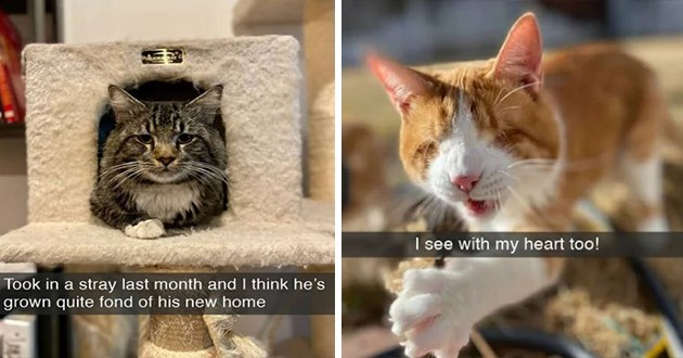 "fresh cat snaps - thumbnail includes two images - one of a cat in cat bed ""Took in a stray last month and I think he's grown quite fond of his new home"" and one of a blind cat ""I see with my heart too!"""