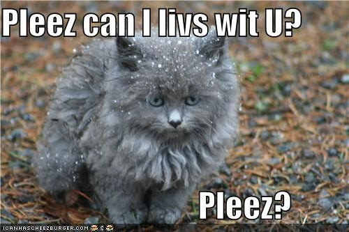 cold cute frozen kitten lolcats lolkittehs pleez snow - 1357544192