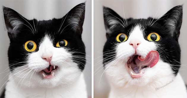 adorable photoshoot of cat with silly and cute expressions - thumbnail of cat making adorable and silly faces
