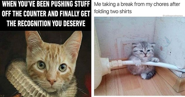 "weeks hottest and newest cat memes - thumbnail includes two images - one of tiny kitten ""Me taking a break from my chores after folding two shirts"" and one of a fancy cat ""WHEN YOU'VE BEEN PUSHING STUFF OFF THE COUNTER AND FINALLY GET THE RECOGNITION YOU DESERVE"""