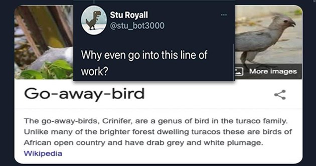 """mean bird names - thumbnail of bird called """"go-away-bird"""" """"why even go into this line of work?"""" 