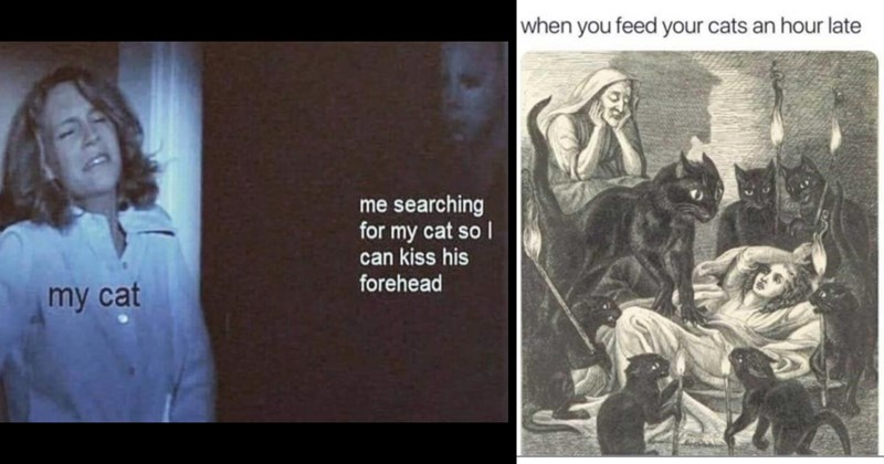 cat memes, cute memes, wholesome memes, animal memes, funny memes, relatable memes, cats, aww, pets, funny, memes, animals | searching my cat so can kiss his forehead my cat hiding from serial killer | feed cats an hour late illustration of a person attacked by black cats
