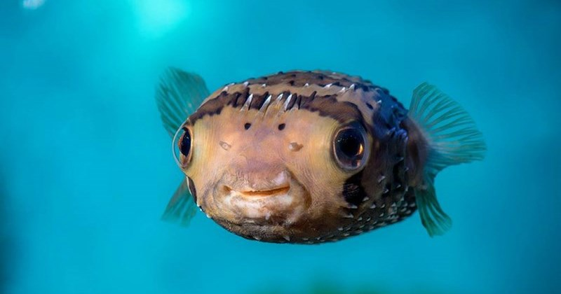 list ocean cute fish animals - 1358853