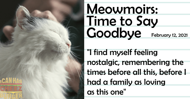 "the final entry of Meowmoirs diary of a cat thumbnail includes a picture of a happy cat being petted 'Cat - Meowmoirs: Time to Say Goodbye Fetbruery 12, 2021 ""I find myself feeling nostalgic, remembering the times before all this, before I had a family as loving as this one"" ICAN HAS BGER'"