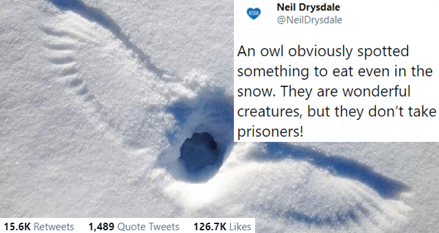 this week's collection of animal tweets thumbnail includes a picture of an outline of an owl in the snow 'Eye - Neil Drysdale @NeilDrysdale ... An owl obviously spotted something to eat even in the snow. They are wonderful creatures, but they don't take prisoners! 2:36 AM Feb 9, 2021 · Twitter for iPhone 15.6K Retweets 1,489 Quote Tweets 126.7K Likes'