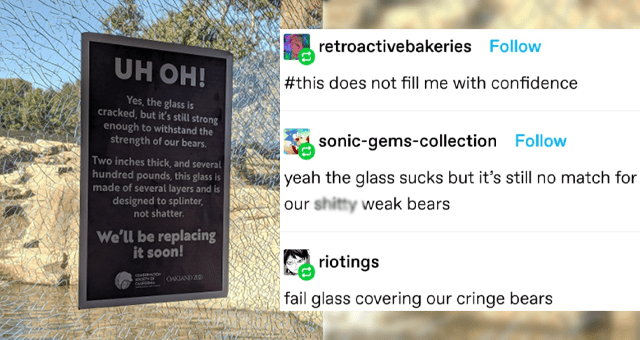 collection of funny animal tumblr posts thumbnail includes a picture of cracked glass with a warning sign on it 'Water - UH OH! Yes, the glass is cracked, but iť's still strong enough to withstand the strength of our bears. Two inches thick, and several hundred pounds, this glass is made of several layers and is designed to splinter, not shatter. We'll be replacing it soon! CO O OORTY OF OAKIAND Z0 CAFOR retroactivebakeries #this does not fill me with confidence sonic-gems-collection yeah the g'