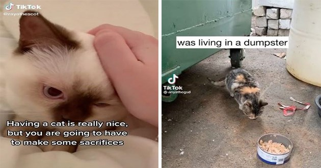"thumbnail includes two images - ""Having a cat is really nice, but you are going to have to make some sacrifices"" and kitten by dumpster ""was living in a dumpster"""