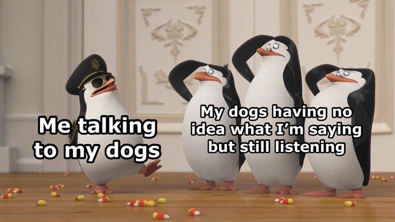 "wholesome animal memes - thumbnail of penguins from Madagascar ""Me talking to my dogs My dogs having no idea what I'm saying but still listening"""