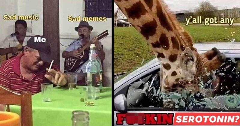 depression memes, anxiety memes, mental health memes, sad memes, funny memes, relatable memes, dark memes, dark humor, memes, lol | y'all got any SEROTONIN? giraffe smashing its head through a car window | Sad music Sad memes sad man smoking while musicians play behind him