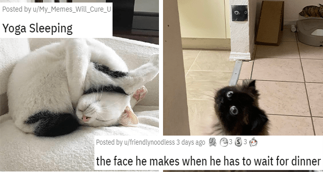 posts about cats being weird thumbnail includes two pictures including a cat looking shocked with a photo of the cat looking shocked in the background 'the face he makes when he has to wait for dinner u/friendlynoodless' and another of a cat sleeping in a weird position 'Yoga Sleeping u/My_Memes_Will_Cure_U'