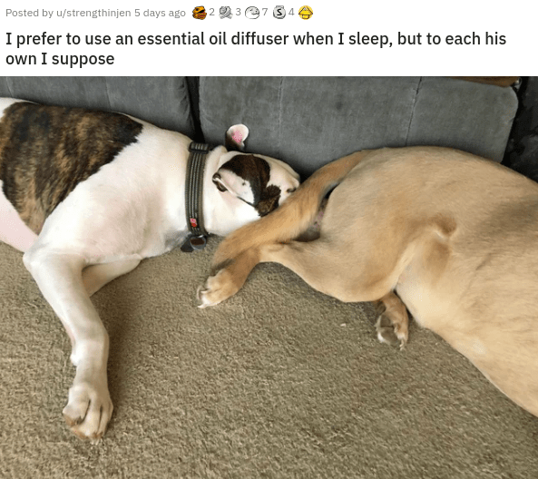 pics videos of cute dogs looking funny and silly subreddit dedicated to photos of good doggos in adorable and entertaining situations | Posted by u/strengthinjen 5 days ago 37 34 prefer use an essential oil diffuser sleep, but each his own suppose dog sleeping with its face shoved under another dog's butt