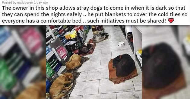 "pics and vids of the cutest animals of the week - thumbnail of dogs sleeping inside a store ""The owner in this shop allows stray dogs to come in when it is dark so that they can spend the nights safely .. he put blankets to cover the cold tiles so everyone has a comfortable bed .. such initiatives must be shared!"""