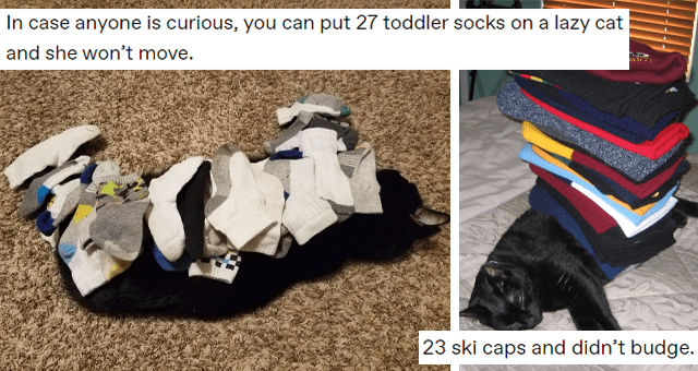 tumblr thread about stacking things on super lazy cats thumbnail includes a picture of a cat with socks on it 'Asphalt - humantested-turingapproved Follow In case anyone is curious, you can put 27 toddler socks on a lazy cat and she won't move.' and another of a cat with a stack of ski caps on it 'Dog - mostlycatsmostly 23 ski caps and didn't budge'