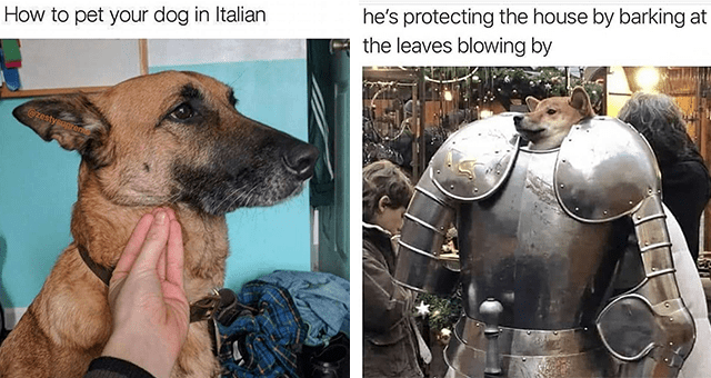 this week's collection of dog memes thumbnail includes two memes including a dog in an armor 'Vertebrate - he's protecting the house by barking at the leaves blowing by' and another of someone petting a dog with their hand doing a 'wait' sign 'Dog - How to pet your dog in Italian @zestysupren'