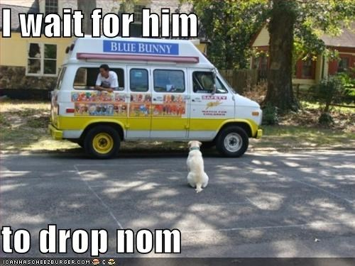 food,ice cream,labrador,nom nom nom,truck,waiting