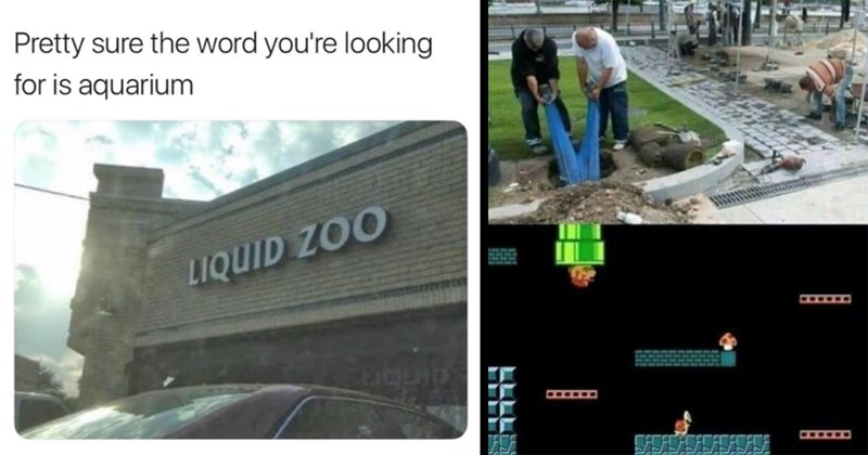 funny memes, random memes, dank memes, dumb memes, stupid memes, shitposts, funny, lol, memes, funny tweets, puns, dad jokes, dumb humor | Pretty sure word looking is aquarium LIQUID ZOO | two man pulling on the legs of another person stuck upside down inside a hole with the bottom half of the pic spliced with a screenshot from a Super Mario level with Mario entering through a pipe in the ceiling