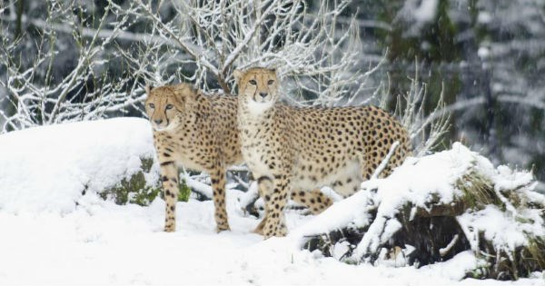 snow,oregon,zoo,animals
