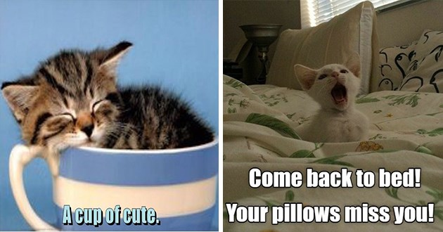 """ichc original cat memes lolcats - thumbnail includes two cat memes - kitten sleeping in a cup """"a cup of cute"""" and a cat on a bed """"come back to bed! Your pillows miss you!"""""""