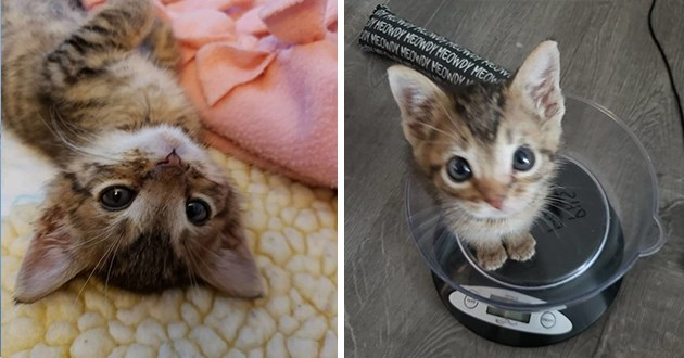 images of tiny kitten named mouse - thumbnail includes two images of small kitten named mouse