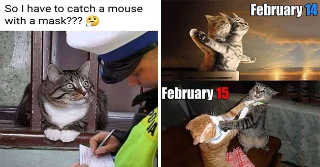 """weeks hottest and newest cat memes - thumbnail includes two images - one of a cat being written up """" so i have to wear a mask to catch a mouse??"""" and one of two cats performing titanic scene and then fighting """"feb 14 feb 15"""""""